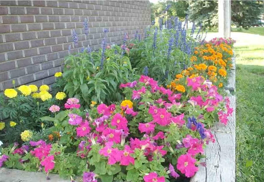 Volunteer Flower Garden Cushing
